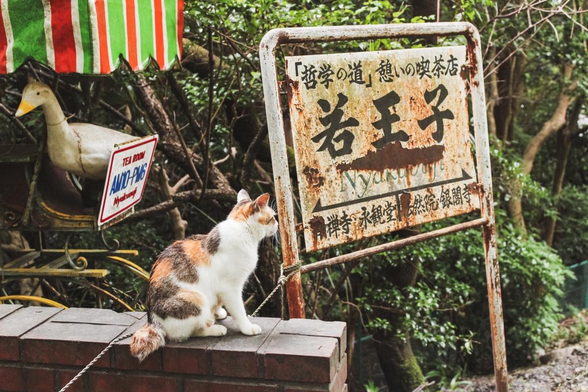摄影志:哲学猫,其一